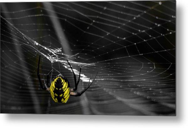 Wicked Web Metal Print by Brian Stevens