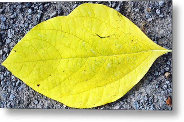 Yellow Leaf Metal Print