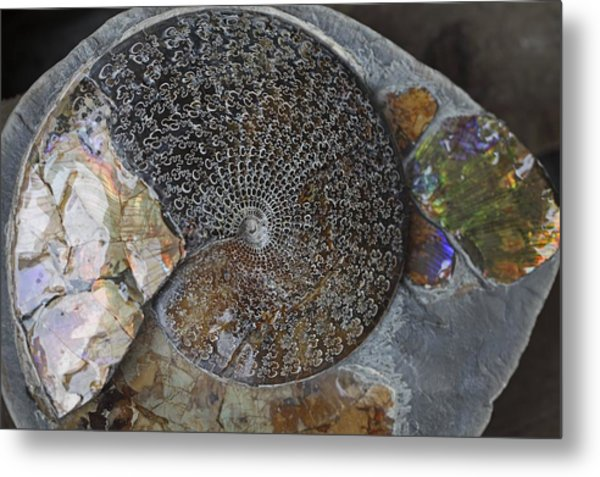 Ammonite Fossil Metal Print by Dirk Wiersma