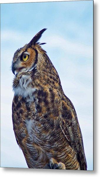Great Horned Owl Metal Print by Linda Pulvermacher