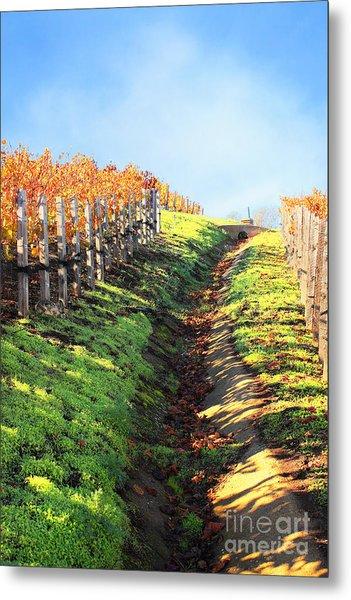 Late Autumn In Napa Valley Metal Print by Ellen Cotton