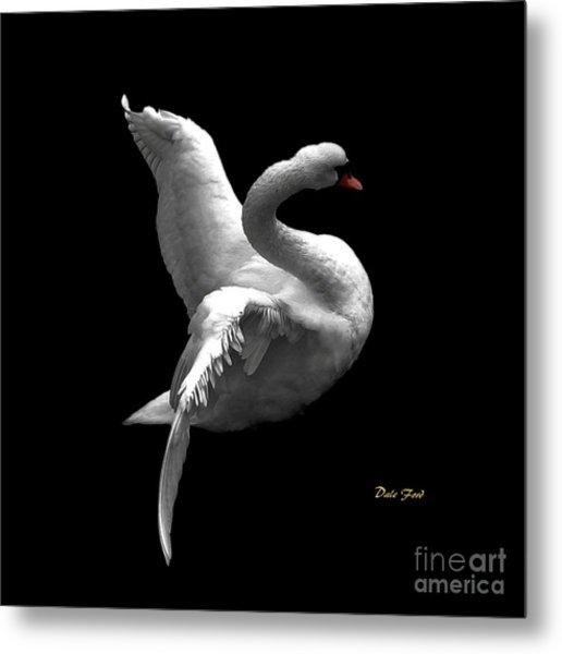 Majestic Swan 2 Metal Print