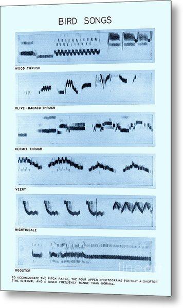 Spectrogram Of Bird Songs Metal Print