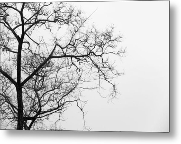 Tree Against A White Sky In The Early Morning Hours Metal Print by Gal Ashkenazi
