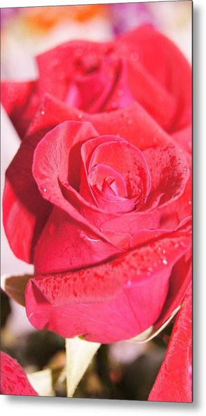 Rose Metal Print by Gornganogphatchara Kalapun