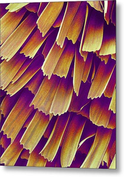 Butterfly Wing, Sem Metal Print by Susumu Nishinaga