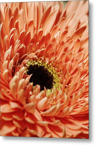Flower Close Up Metal Print by Ignaz Uri