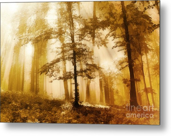 Golden Forest  Metal Print by Odon Czintos