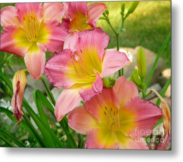 3 Lillies Metal Print