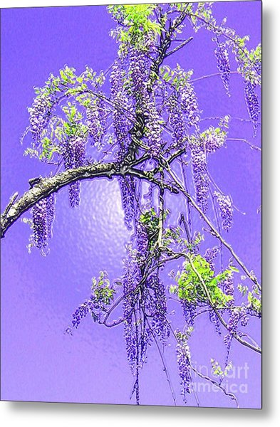 Purple Passion Wisteria Metal Print
