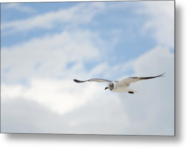 Seagull Metal Print by Mike Rivera