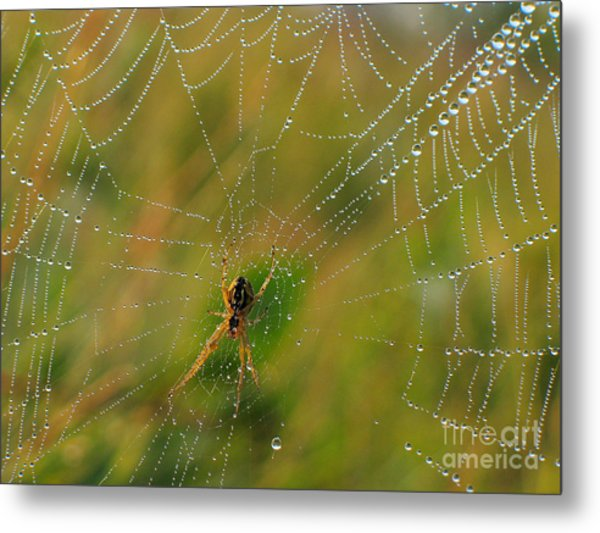 Spiderweb Metal Print by Odon Czintos
