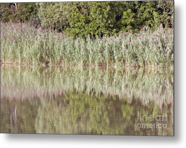 The Reeds Metal Print by Odon Czintos