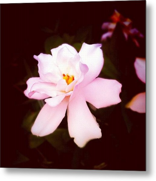 #flower #gang_family #gf_daily Metal Print