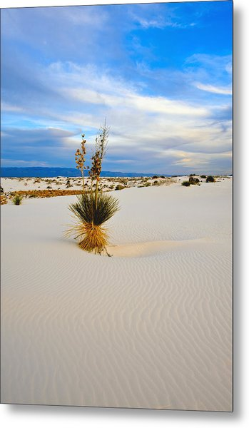 White Sands Metal Print by Larry Gohl