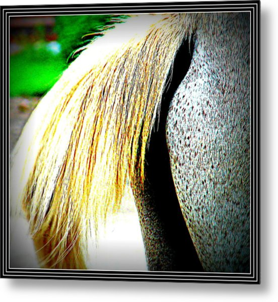 Mule Tail Waging Metal Print by Anand Swaroop Manchiraju