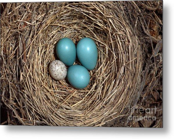 Robins Nest And Cowbird Egg Metal Print