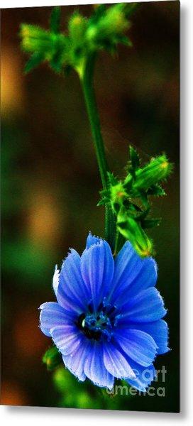 Flower Metal Print by Lenroy Johnson