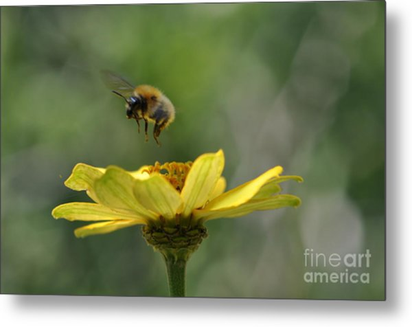A Bee Metal Print by Sylvie Leandre