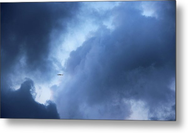 A Bird Flying In Cloudy Sky Metal Print by Gal Ashkenazi