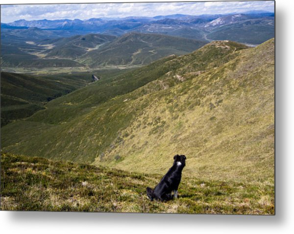 A Border Collie's Playland Metal Print by Kelly Turnage