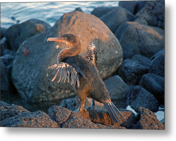 A Cormorant At Sunset Metal Print