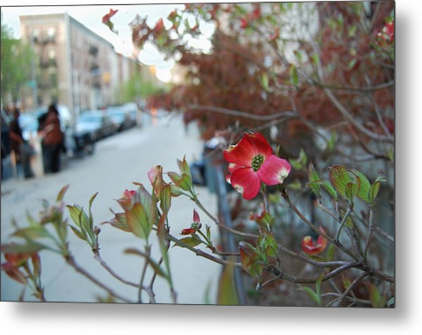A Dogwood Grows In Brooklyn Metal Print