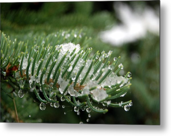 A First Snowfall Metal Print