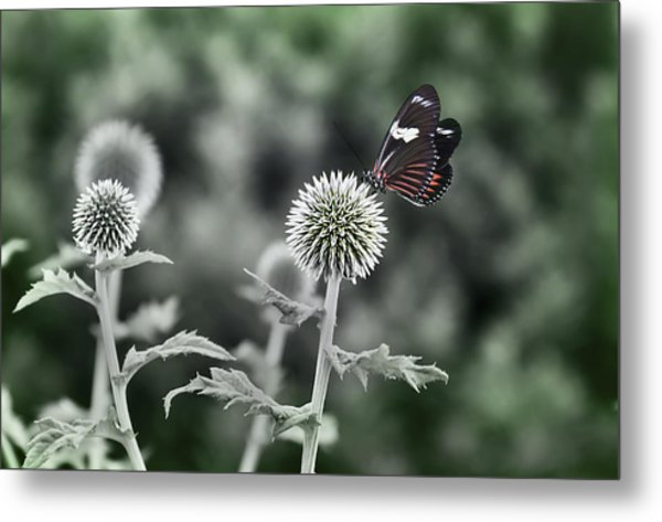A Flight Of Fancy Metal Print