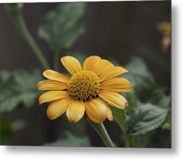 A Flowers Flower Metal Print