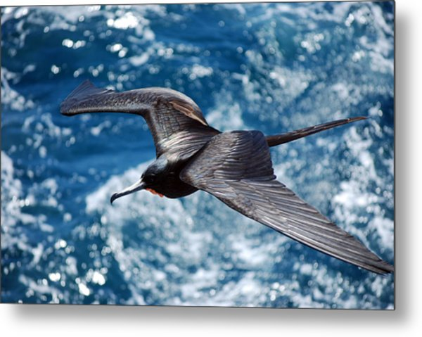 a Frigate in Flight Metal Print