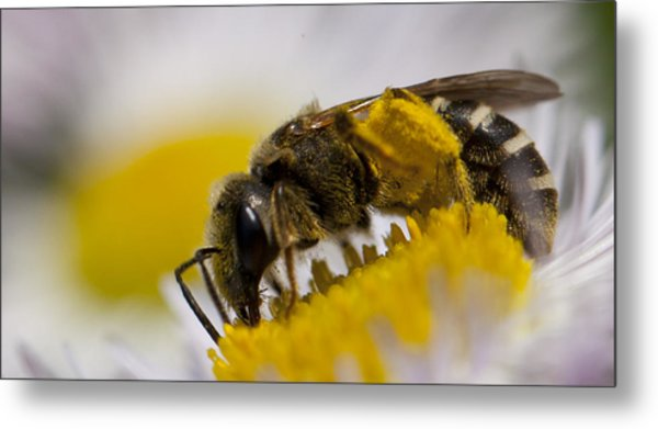 A Honey Bee Metal Print
