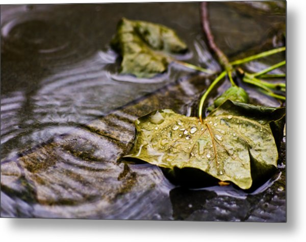 A Leaf In The Rain Metal Print