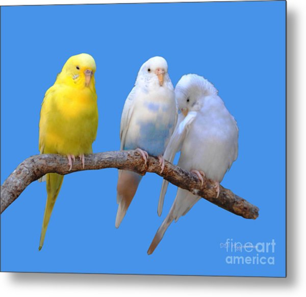 A Pair And A Spare Metal Print by DiDi Higginbotham
