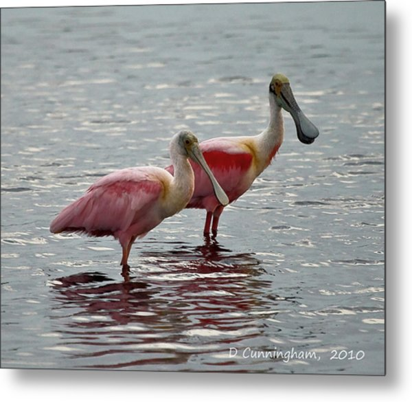 A Pair Of Spoonbills Metal Print