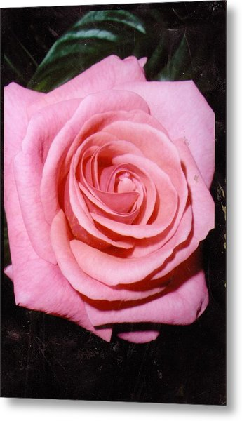 A Rose By Any Other Name Would Still Smell Just As Sweet Metal Print by Anne-Elizabeth Whiteway