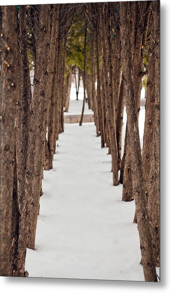 A Row Of Trees Outside In The Snow During Winter. Metal Print by Adam Hester