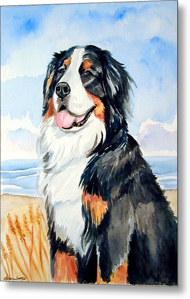 A Summer Day - Bernese Mountain Dog Metal Print