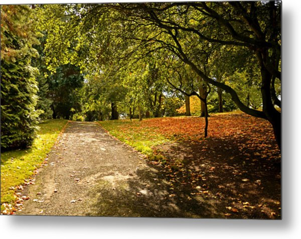 A Touch Of Autumn Metal Print by Martina Fagan