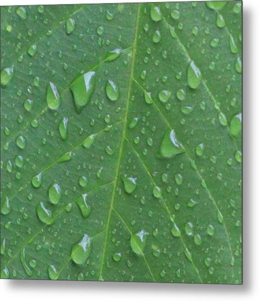A Tree Leaf Under The Rain, By My Lens Metal Print