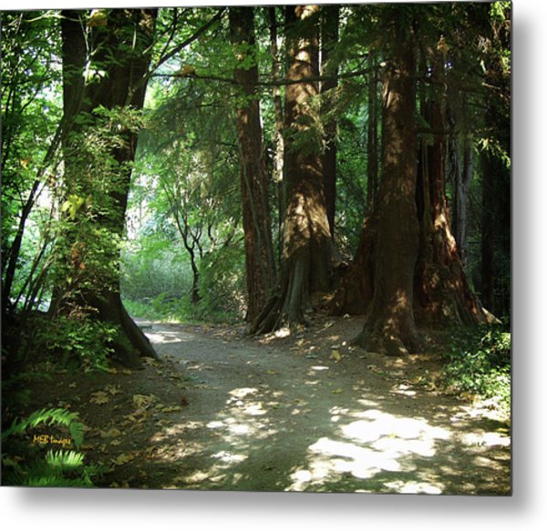 A Walk In The Forest Metal Print