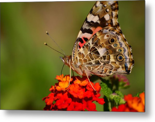 A Wing Of Beauty Metal Print
