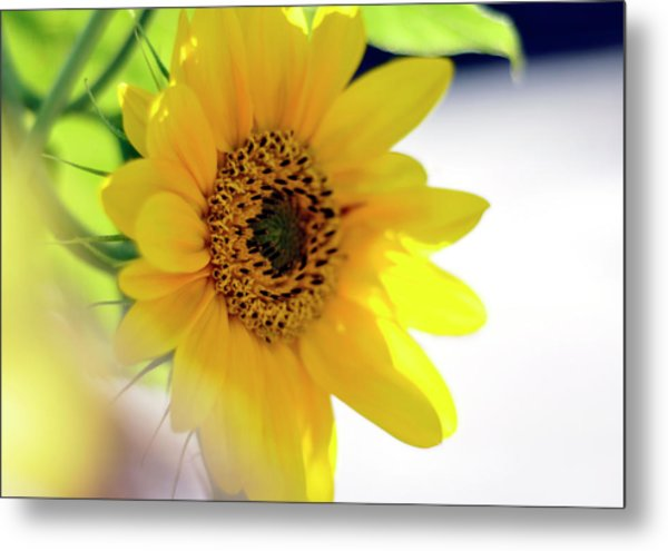 A Wish For Sunshine In Your Day Metal Print