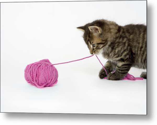 A Young Tabby Kitten Playing With A Ball Of Wool. Metal Print by Nicola Tree