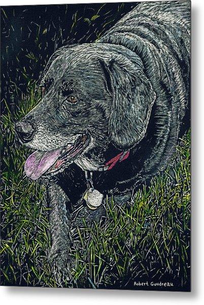Abbe The Dog Metal Print by Robert Goudreau