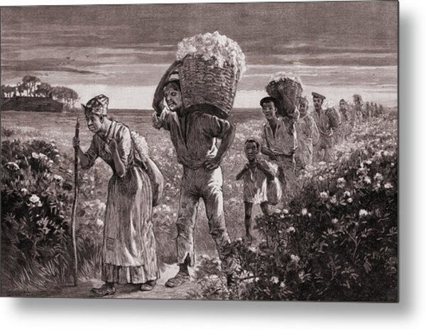 African Americans Leaving A Cotton Metal Print by Everett