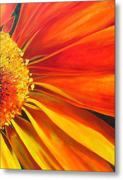 African Daisy Metal Print by Raette Meredith
