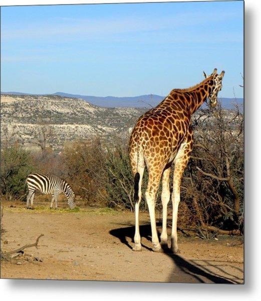 African Safari In Arizona Metal Print by Kim Galluzzo Wozniak