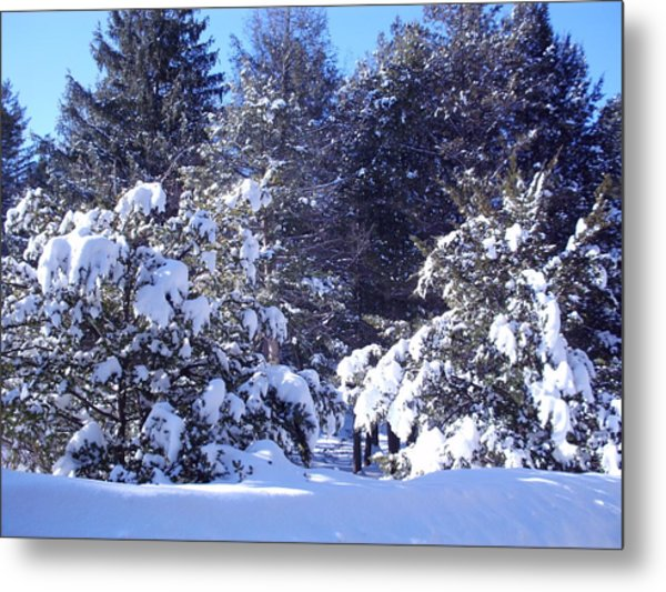 After A New England Snowstorm Metal Print by Lucien Beauley