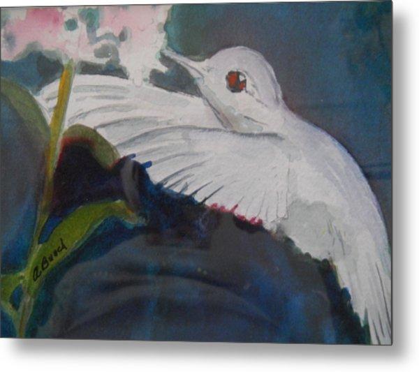 Albino Humingbird Metal Print